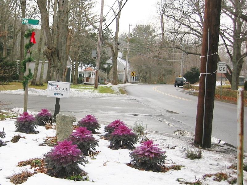 flowering-kale-winter