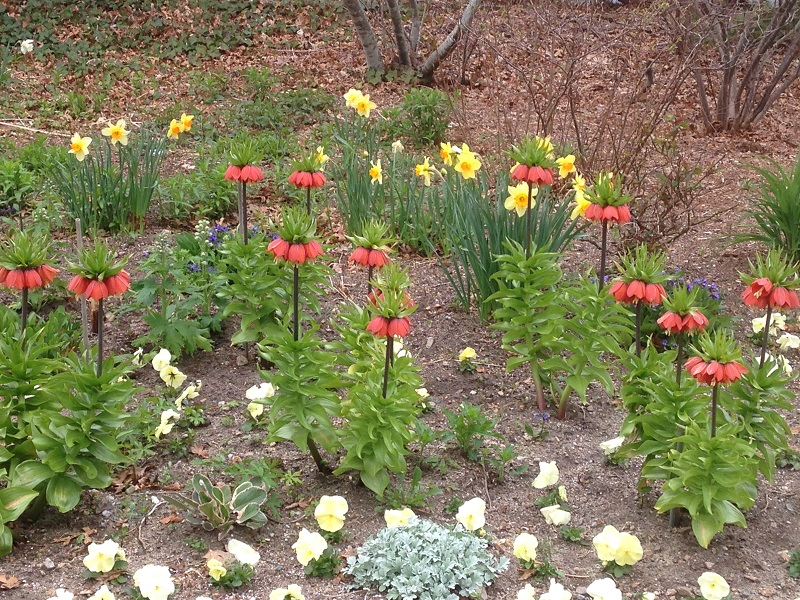 spring-bulbs-reduced