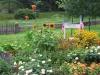 2_summer_planting