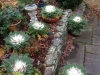 flowering-cabbages-reduced