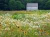 meadow_30