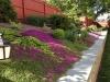 flowering-thyme in historic garden