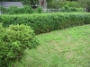 spooner-hedge-before-pruning