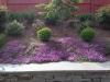 flowering-thyme-2