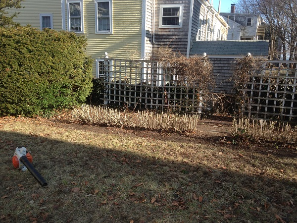 hedge-pruning-after