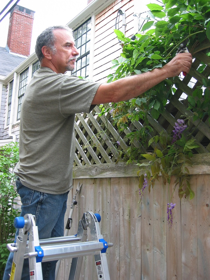 pruning-wisteria-3