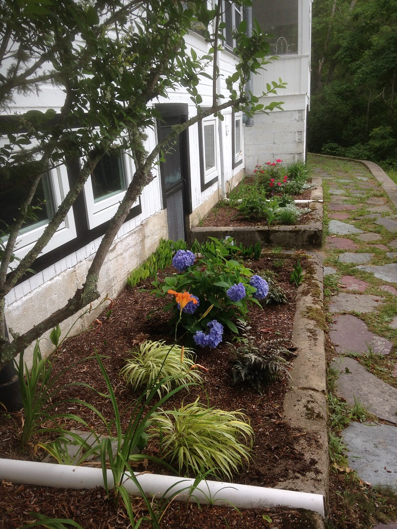planting-bed-hydrangea-and-roses
