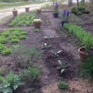 Vegetable garden season opener – starting seeds